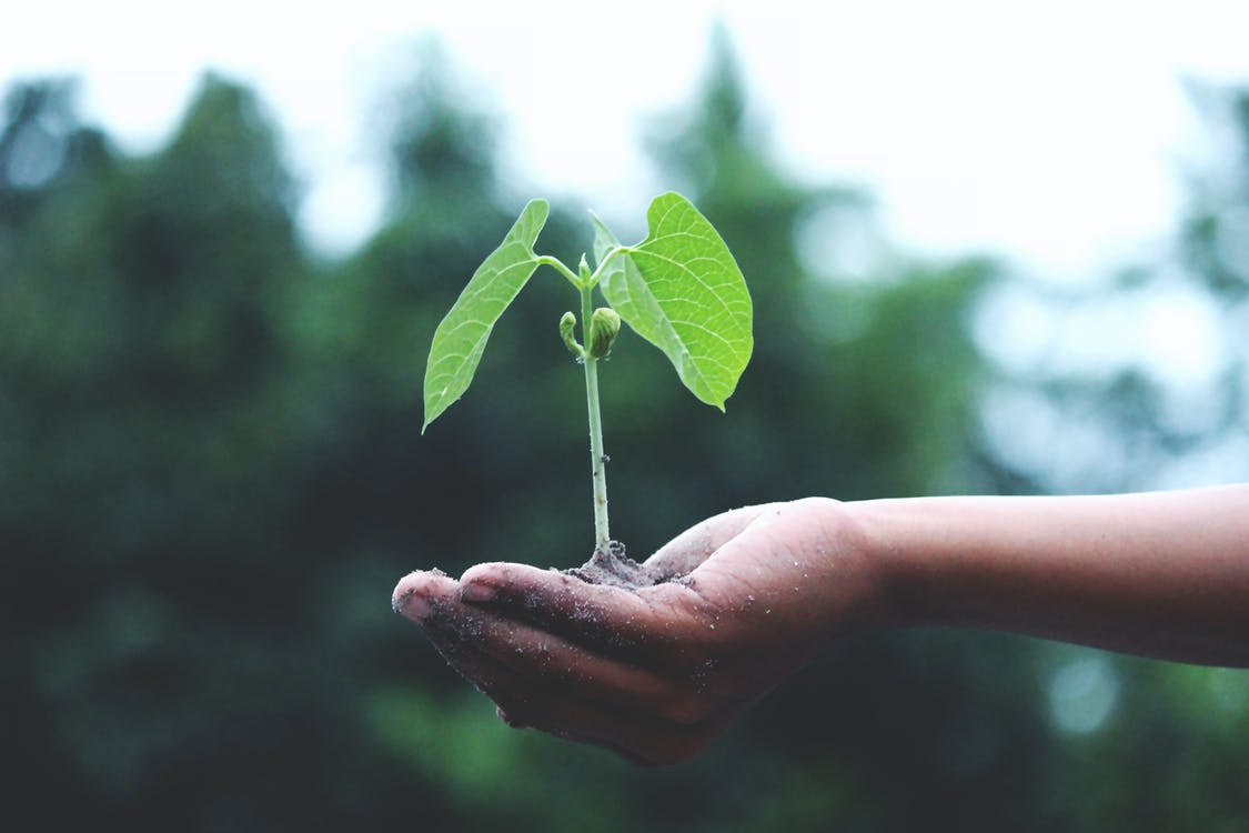 A person holding a green tree, highlighting the importance of sustainable site planning